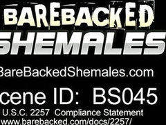 Shemale Tube Free Download