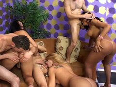 Transsexual swingers in hot orgy